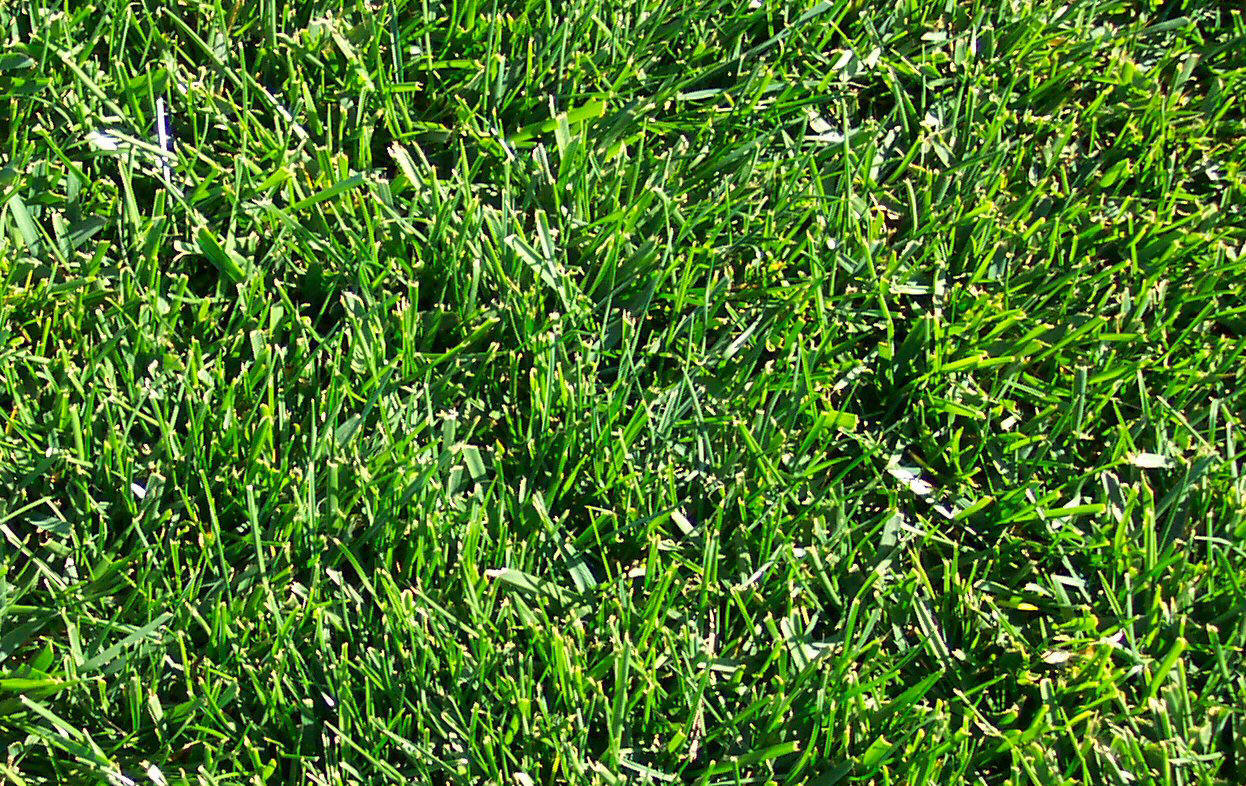 Lawn care tips for midwest lawns for Care for new sod